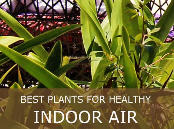 Nasa chart air quality plants